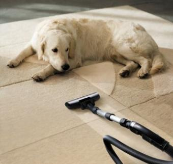 Dog watches a vacuum cleaner