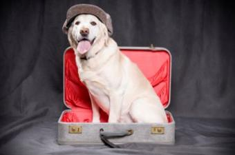 Tips That Make Moving With Dogs Easier