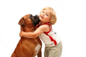 Incredible Stories of Dogs Saving Human Lives