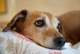 Examples of the World's Oldest Dogs