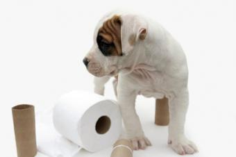 Naughty puppy in need of training
