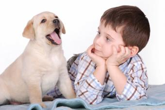Lab pup with child