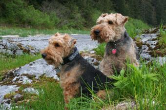 https://cf.ltkcdn.net/dogs/images/slide/90262-849x565-Welsh-1.jpg