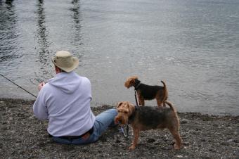 https://cf.ltkcdn.net/dogs/images/slide/90263-849x565-Welsh-5.jpg