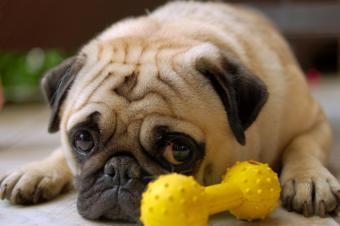 https://cf.ltkcdn.net/dogs/images/slide/90275-850x565-Sad-little-pug.jpg