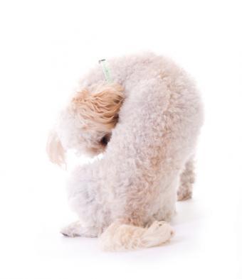 https://cf.ltkcdn.net/dogs/images/slide/90280-644x745-Cleaning.jpg