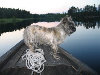 https://cf.ltkcdn.net/dogs/images/slide/90295-800x600-Cairn-boating.jpg