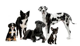 https://cf.ltkcdn.net/dogs/images/slide/90304-850x488-Frenchie-and-friends.jpg