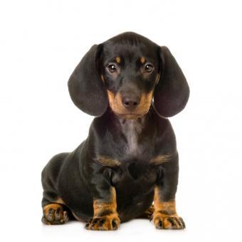 https://cf.ltkcdn.net/dogs/images/slide/90342-693x693-dog-heartworm-symptoms-6.jpg