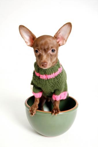 https://cf.ltkcdn.net/dogs/images/slide/90386-566x848-Teacup3.jpg
