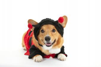 https://cf.ltkcdn.net/dogs/images/slide/90392-849x565-HD3.jpg