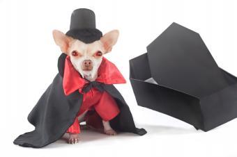 https://cf.ltkcdn.net/dogs/images/slide/90395-849x565-HD6.jpg