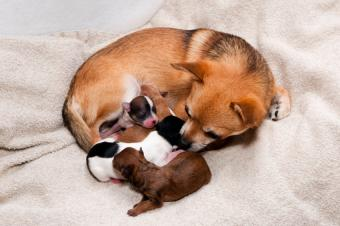 https://cf.ltkcdn.net/dogs/images/slide/90464-850x565-Mom_and_litter.jpg