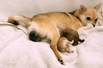 https://cf.ltkcdn.net/dogs/images/slide/90468-850x565-Puppy_sack_emerging.jpg