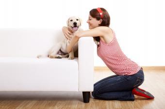 https://cf.ltkcdn.net/dogs/images/slide/90485-849x565-canine_companion.JPG