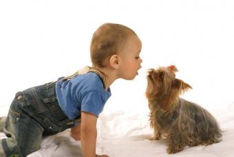 https://cf.ltkcdn.net/dogs/images/slide/90498-844x569-Toddler_and_Yorkie.jpg