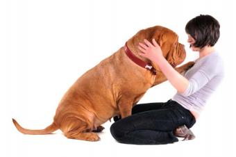 https://cf.ltkcdn.net/dogs/images/slide/90500-849x565-Huge_Dog.jpg