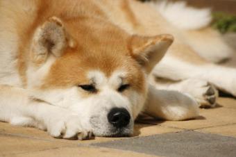 https://cf.ltkcdn.net/dogs/images/slide/90501-849x565-Napping_Dog.jpg