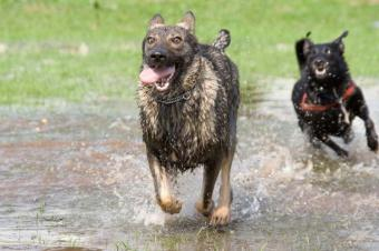 https://cf.ltkcdn.net/dogs/images/slide/90503-800x532-dogs_running.jpg