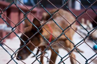 https://cf.ltkcdn.net/dogs/images/slide/90505-849x565-Fenced_Dog.jpg