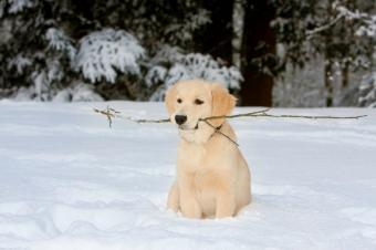 https://cf.ltkcdn.net/dogs/images/slide/90517-849x565-yukiko-puppy-names.jpg