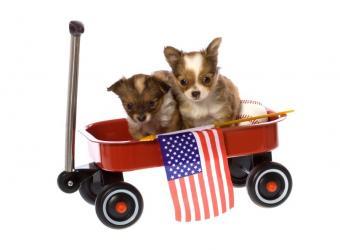 https://cf.ltkcdn.net/dogs/images/slide/90521-808x594-fun-puppies.jpg
