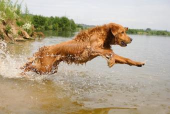 https://cf.ltkcdn.net/dogs/images/slide/90526-846x567-Golden_Retriever.JPG