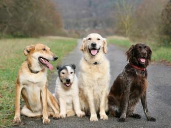 https://cf.ltkcdn.net/dogs/images/slide/90533-800x600-four_dogs.JPG
