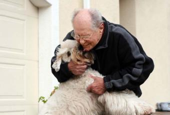 Canine Geriatric Care