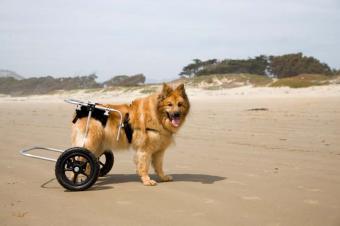 https://cf.ltkcdn.net/dogs/images/slide/90545-850x566-Adaptive_Dog.jpg