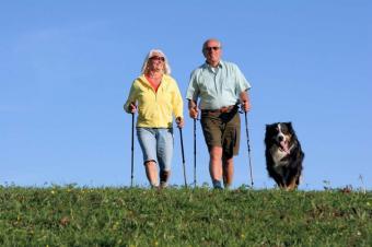 https://cf.ltkcdn.net/dogs/images/slide/90549-850x566-Gentle_Walk.jpg
