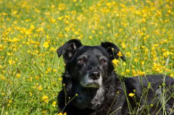 https://cf.ltkcdn.net/dogs/images/slide/90550-850x566-Final_Dog_Days.jpg