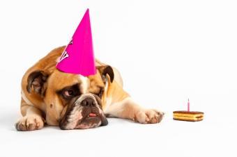 https://cf.ltkcdn.net/dogs/images/slide/90558-849x565-bulldog_gift_idea.JPG