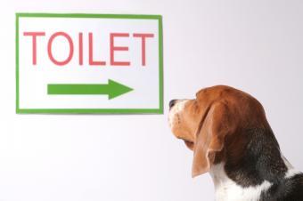 https://cf.ltkcdn.net/dogs/images/slide/90576-849x565-puppy_training_location.JPG