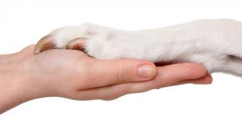 https://cf.ltkcdn.net/dogs/images/slide/90582-850x437-Best_shot_of_nail_quick.jpg