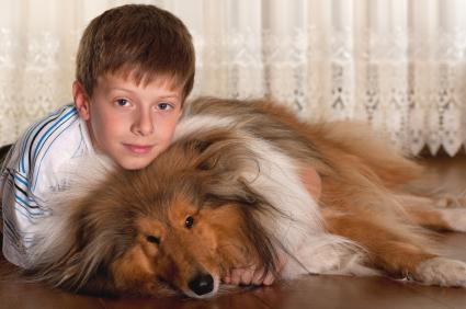 Boy with his Shetland Sheepdog