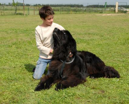 Child with a Newfoundland; Copyright Cynoclub at Dreamstime.com