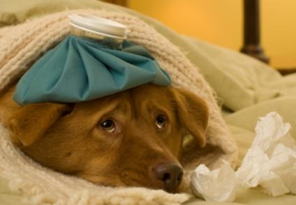Can My Dog Get My Flu