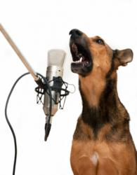 dog barking into microphone