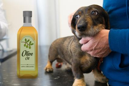 Olive oil and dog