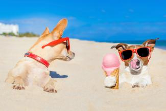 beach pup with frozen treat