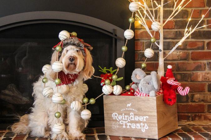Tangled Christmas