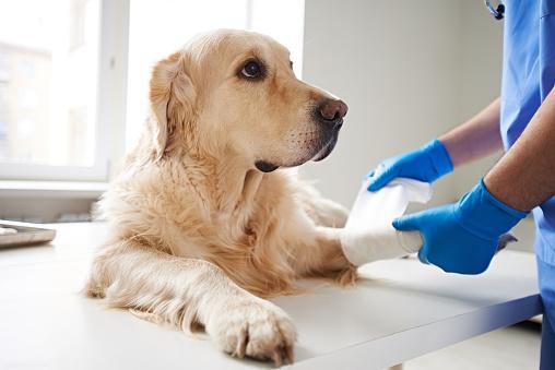 Helping injured dog