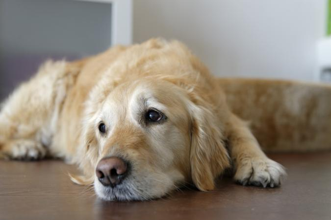 What Causes Dogs To Have Seizures And Can T Walk