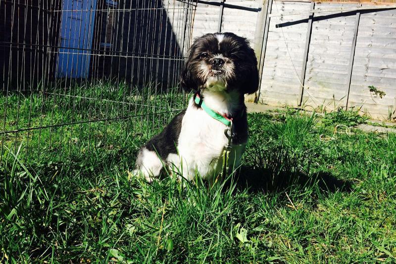 Flooring For An Outdoor Dog Run