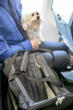 Emotional support dog on airplane