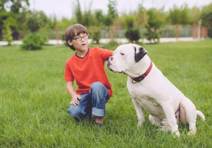 Young boy with an American Bulldog