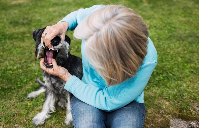 woman examining dog