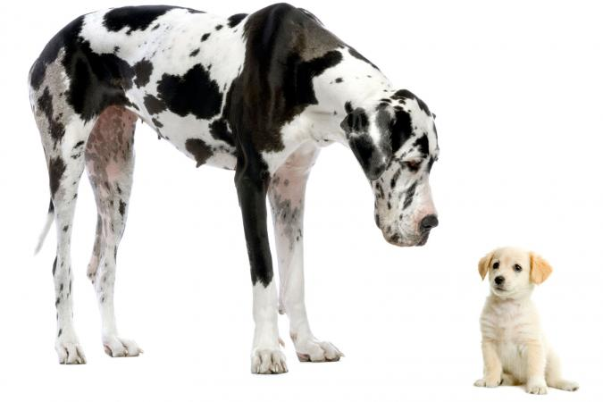 Great Dane and small friend