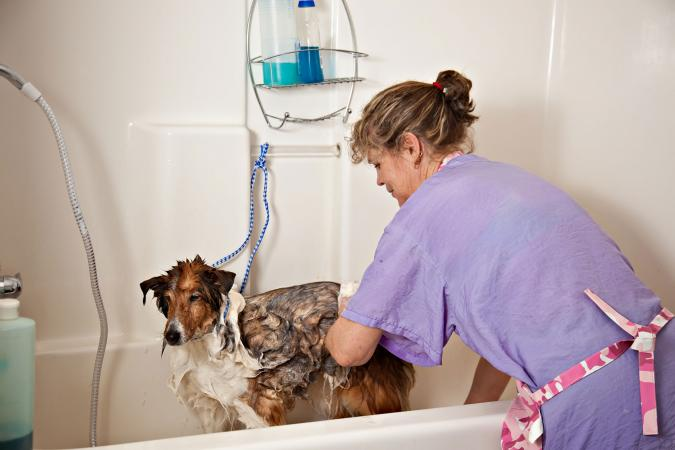 Groomer bathing a dog in tub